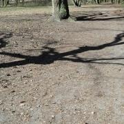 Schatten von Baum, Fotografie von Jörg Fiedler