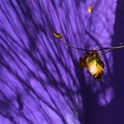Lila Hintergrund mit Schatten von Zweigen, Fotografie von Paul Broich