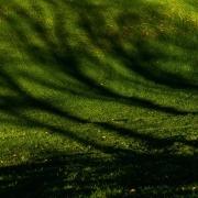 Grüne Wiese mit Schatten von Bäumen, Fotografie von Paul Broich
