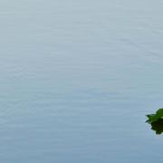 Blaue Wasseroberfläche mit einem grünen Zeig und drei Blätter am rechten unteren Bildteil.