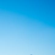 Im unteren sechstel dieses hochformatigen Fotos ist ein Acker, der leicht mit Schnee bedeckt ist. Sechs kahle Bäume ragen in den winterblauen Himmel.