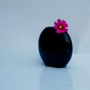 Eine schwarze Vase mit nur einer Blume mit einer pinkfarbenen Blüte auf hellblau-grauem Hintergrund.
