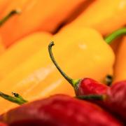 Nahaufnahme von roten Paprika im Vordergrund und gelben im Hintergrund