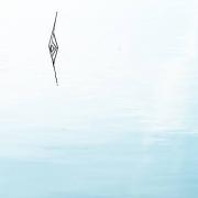 Ein Foto im Hochformat zeigt eine Wasserfläche, die in einen weißen Horizont übergeht. Im oberen Drittel des Fotos bilden Halme ein stilisiertes Auge.