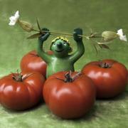 4 Tomaten umringen ein grünes Plastikmännchen, das 2 Leimkrautblüten in den erhobenen Händen hält