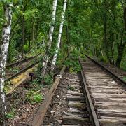 Von Bäumen überwucherte Bahngleise, Fotografie von Sabine Böck