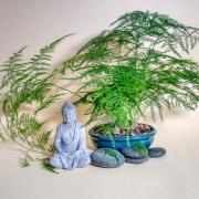 Vor einer Pflanzenschale mit Farn sitzt eine Buddhafigur