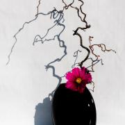 In einer schwarzen Vase, die vor einer weissen Wand steht, steckt ein Zweig und eine lilafarbige Blume